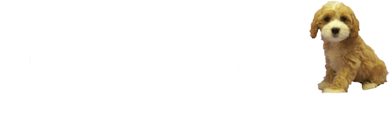 Shake A Paw Rescue and Adoption Center