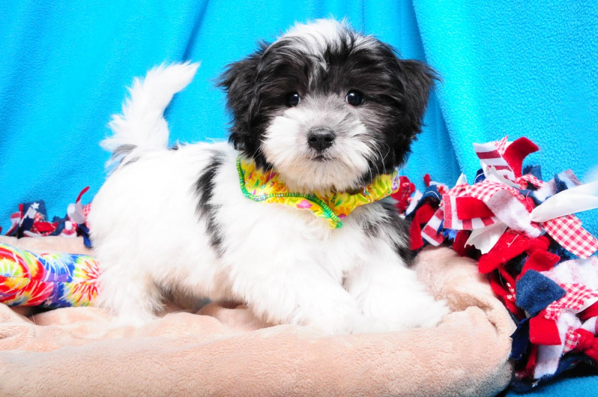 Breeds In Stock - Union, NJ : Shake A Paw - New Jersey's